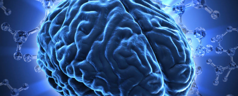 Brain Networks Linked to Human Intelligence