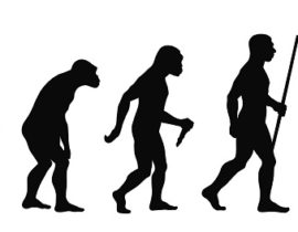 mammalian evolution